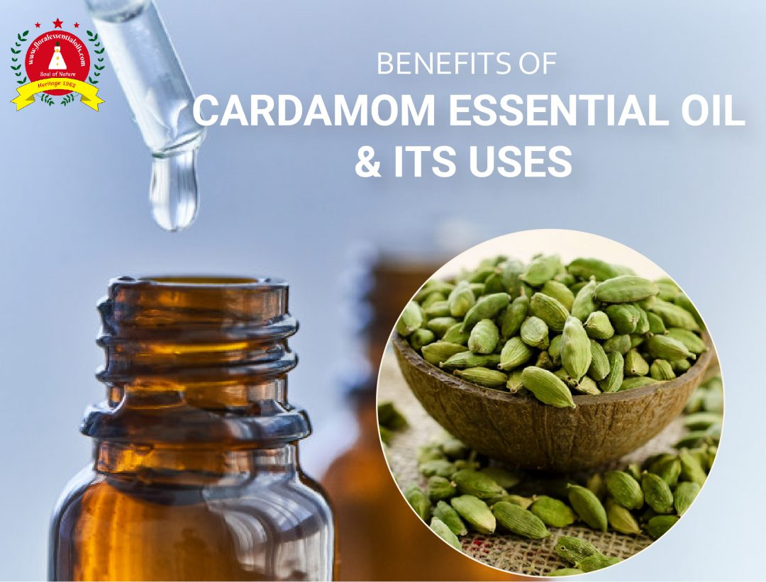 cardamom essential oil benefits and its uses