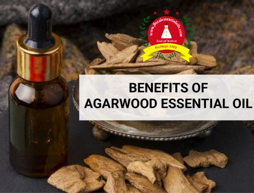 benefits of agarwood essential oil