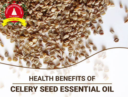 benefits of celery seed essential oil