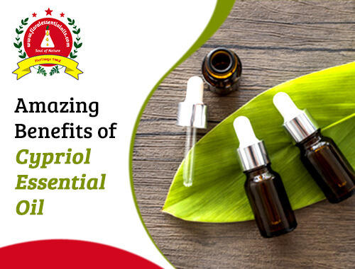 beneifts of cypriol essential oil