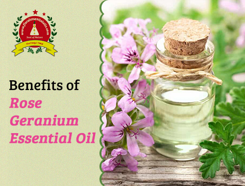 benefits of rose geranium essential oil